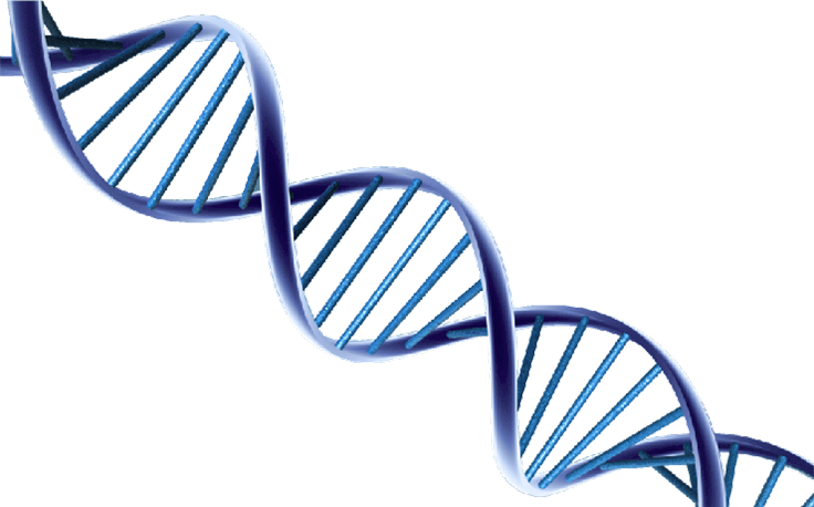 dna-helix.png