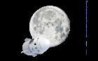 SpaceX-šalje-dvoje-ljudi-na-put-oko-Mjeseca.png